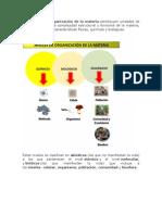 1.Los Niveles de Organizacion de La Materia.