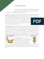 LA ESTÉTICA DEL DISEÑO Ejemplo de Analisis