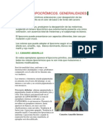 Standar+Canarios+Lipocromos