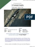 Cóndor Andino - (Vultur Gryphus) - El Ave Mas Imponente de Los Andes