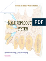 Malereproductive(Author T.globa)