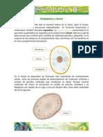 Citoplasma Citosol