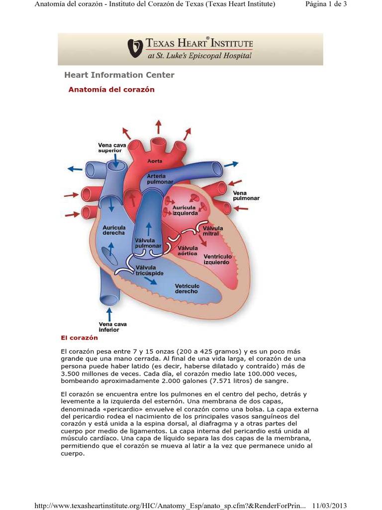 THI Anatomia Del Corazon