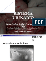 Insuficiencias e Infecciones Urinarias