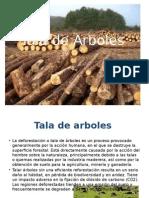 Tala de Arboles