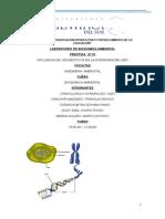 INFLUENCIA DELOS XENOBIOTICOS EN LA INTEGRIDAD  DEL ADN