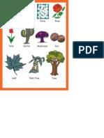 Plantas Em Inglês