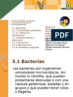 bacterias-