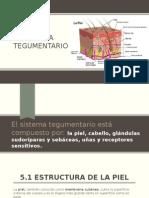 Sistema Tegumentario