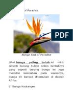 Bunga Bird of Paradise