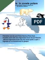 Calatorie in Zonele Polare