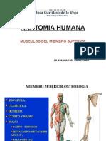 (Clase 3)Musculos, Vascularizacion e Inervacion Del MM.ss.