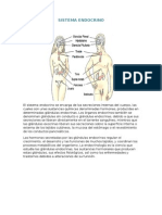Sistema Endocrinoo