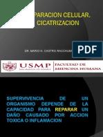 3.     REPARACION-CICATRIZACION - 2014.ppt