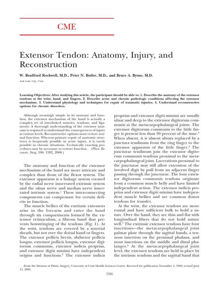 0012-Extensor Tendon Anatomy | Finger | Thumb