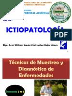 IctiopatSem7y8.pdf