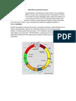 Biotecnologia DNA Mitocondrial
