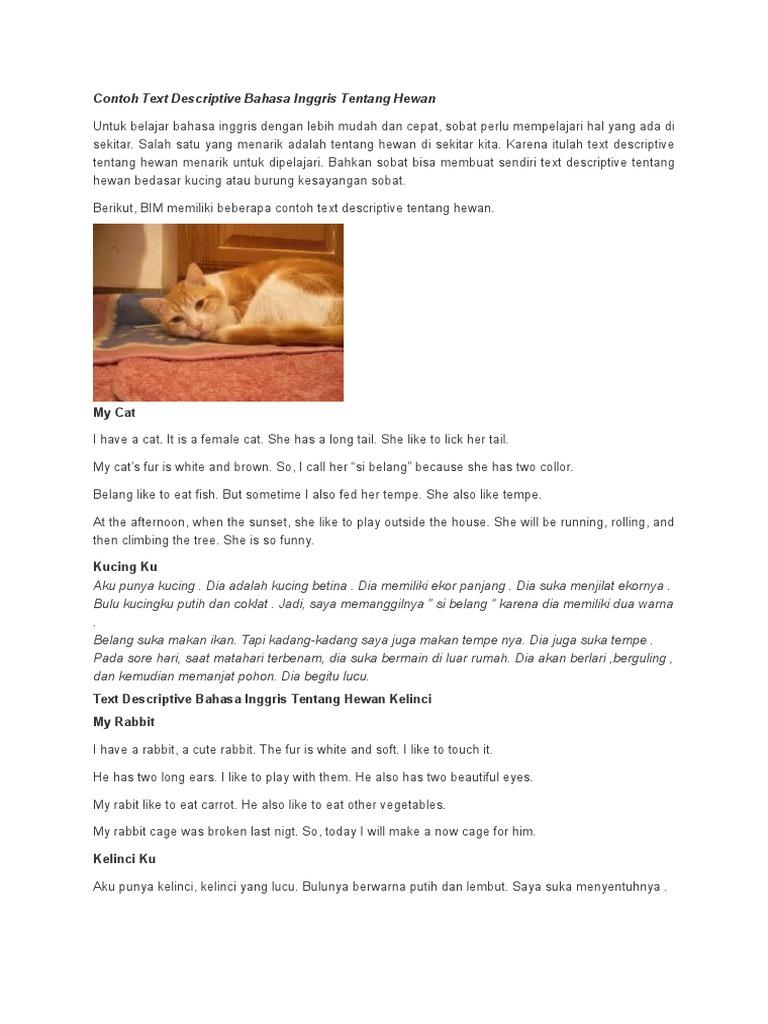 Contoh Text Descriptive Bahasa Inggris Tentang Hewan