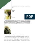Biologia Albinei