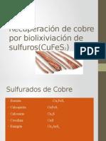 Recuperación de Cobre Por Biolixiviación (CuFeS2) MARI