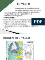 EL TALLO