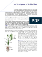 Rice Plant Morphology.pdf