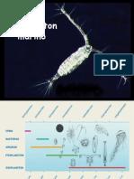 Pract Zooplancton 2015 i