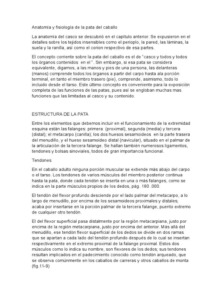 Anatomía y Fisiología de La Pata Del Caballo