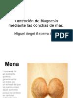 Obtencion Del Magnesio a Partir de Las Conchas de Mar