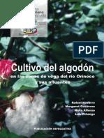 Cultivo Algodon Orinoco