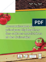 Lepidoptere Legumes