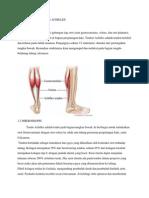 pbl skenario 2 muskulo.pdf