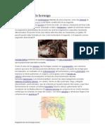 Morfología de La Hormiga