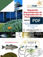 Regulacion Neuroendocrina Reproduccion Peces Teleosteos
