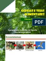 1_Cadeias_e_teias_alimentares.pdf