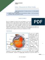 Guía Laboratorio Globo Ocular Tercero Medio Biología