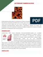 Mycobacterium Tuberculosis Yerina