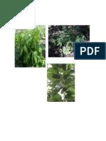 Cuadrante Plantas