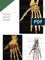 Anatomy Tangan