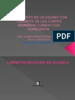 Tratamiento en Un Equino Con Laminitis de Los Cuatro Miembros Con Homeopatía