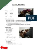 Caso clinico 4 - veterinaria