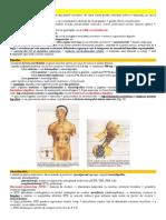 Sistemul Endocrin - Manual a XI A