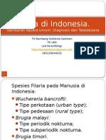 Filaria Di Indonesia
