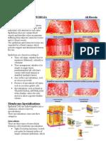 L3 Basic Tissues and Epithelia