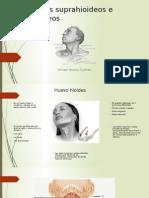 Musculos Suprahioideos e Infraiodeos