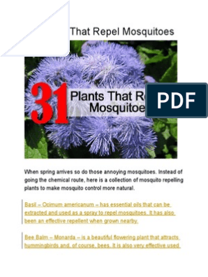 31 Plants That Repel Mosquitoes   Lavandula   Plants