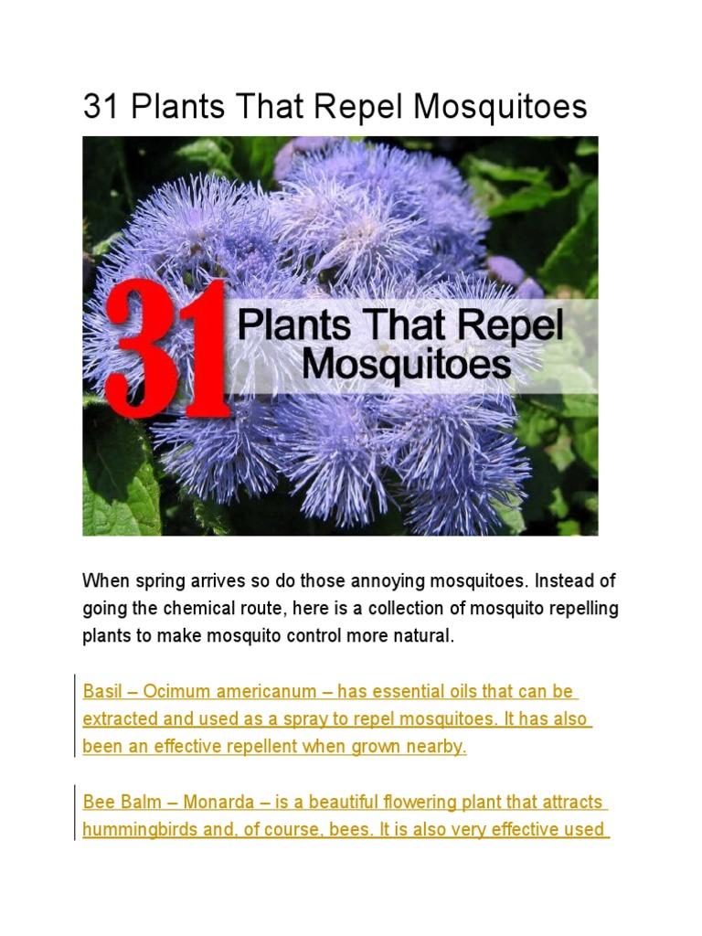 31 Plants That Repel Mosquitoes | Lavandula | Plants