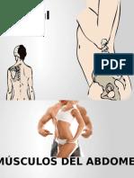 Músculos Anteriores del Abdomen
