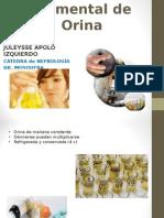 Examen Elemental de Orina