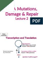 DNA+Mutations_Damage_Repair+2